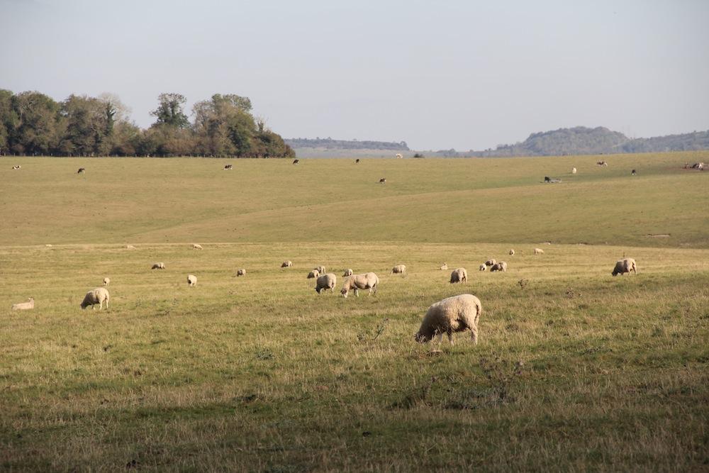stonehenge2