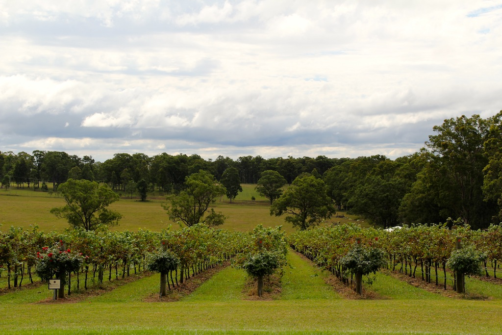 hunter valley vineyards, australia