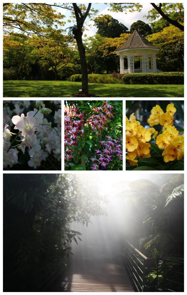 orchid garden.jpg
