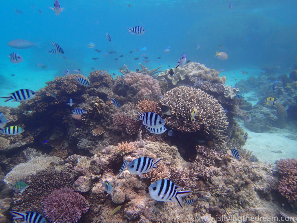 Beautiful-Fish-In-Fiji-2