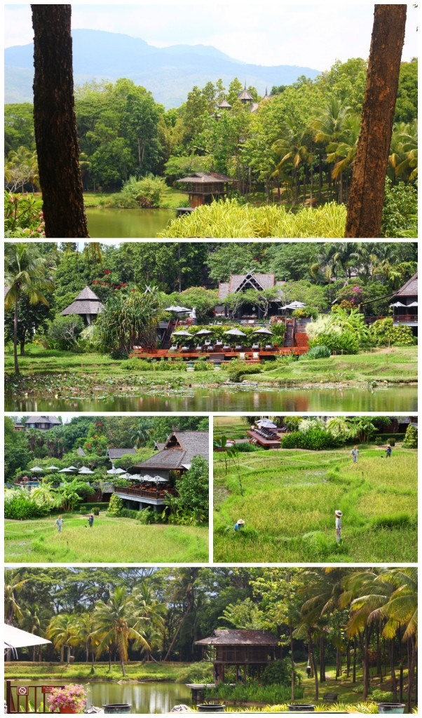 FS Chiang Mai - The Views
