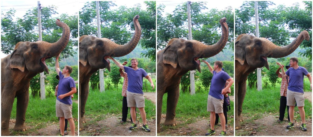 elephant feeding time - the hubs