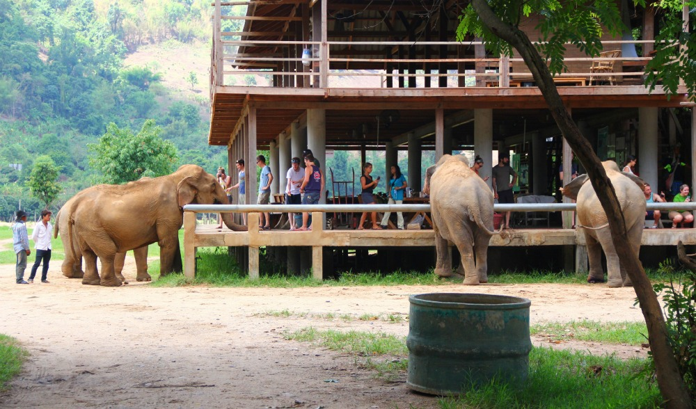 elephant lunch!