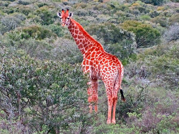 BT_cant_believe_safari_4