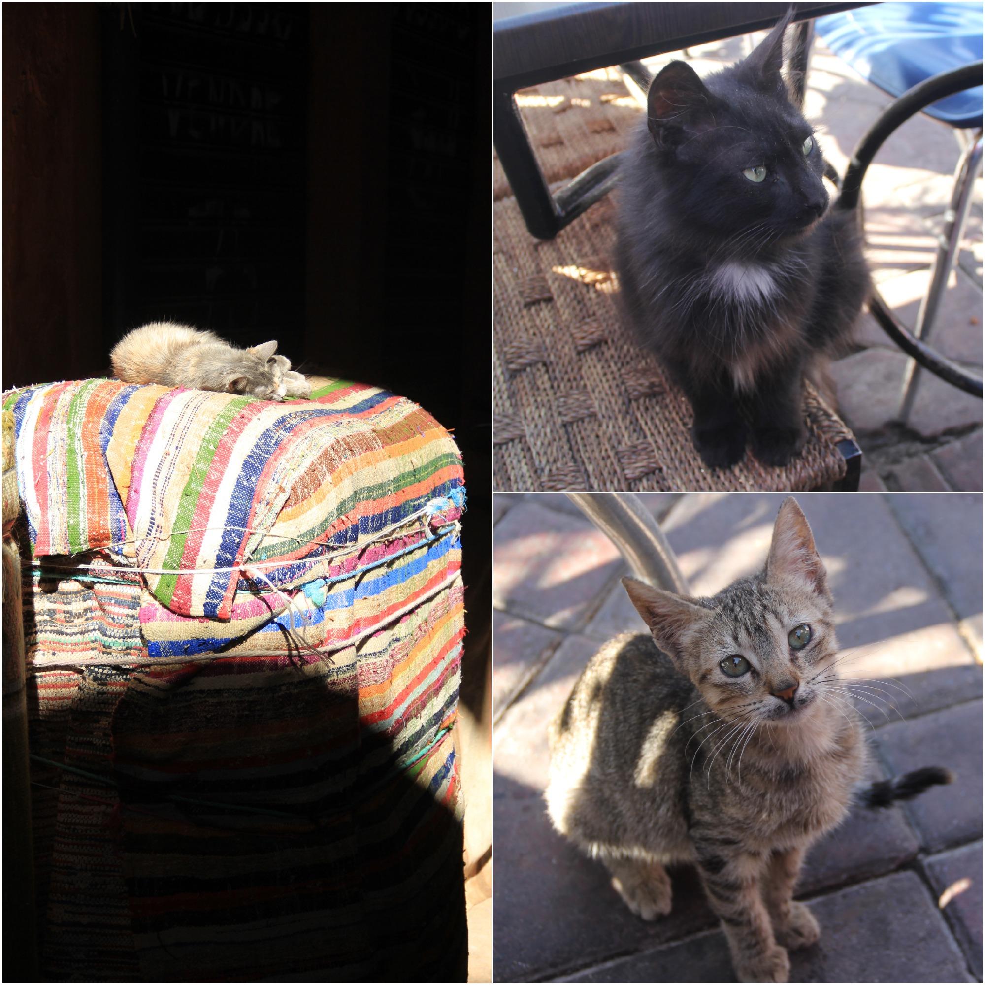 Marrakech - Cats