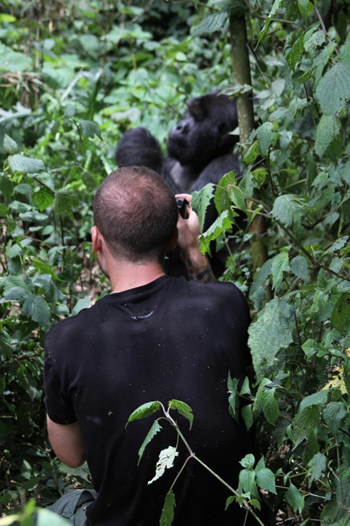 Gorilla trekking Rwanda
