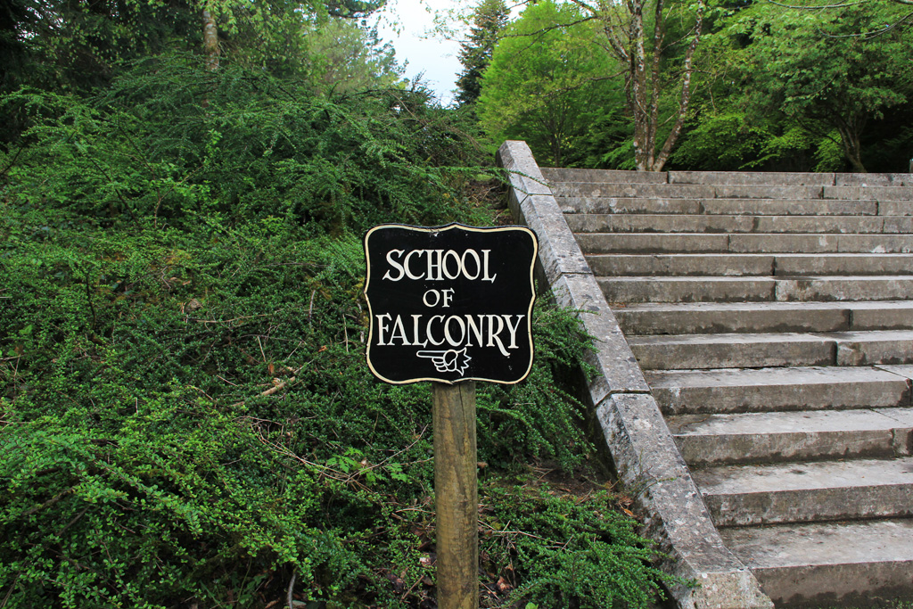 ashford castle school of falconry