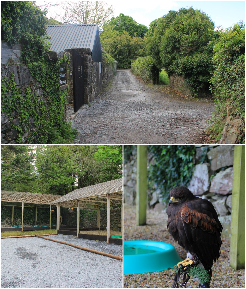 ashford castle - school of falconry.jpg