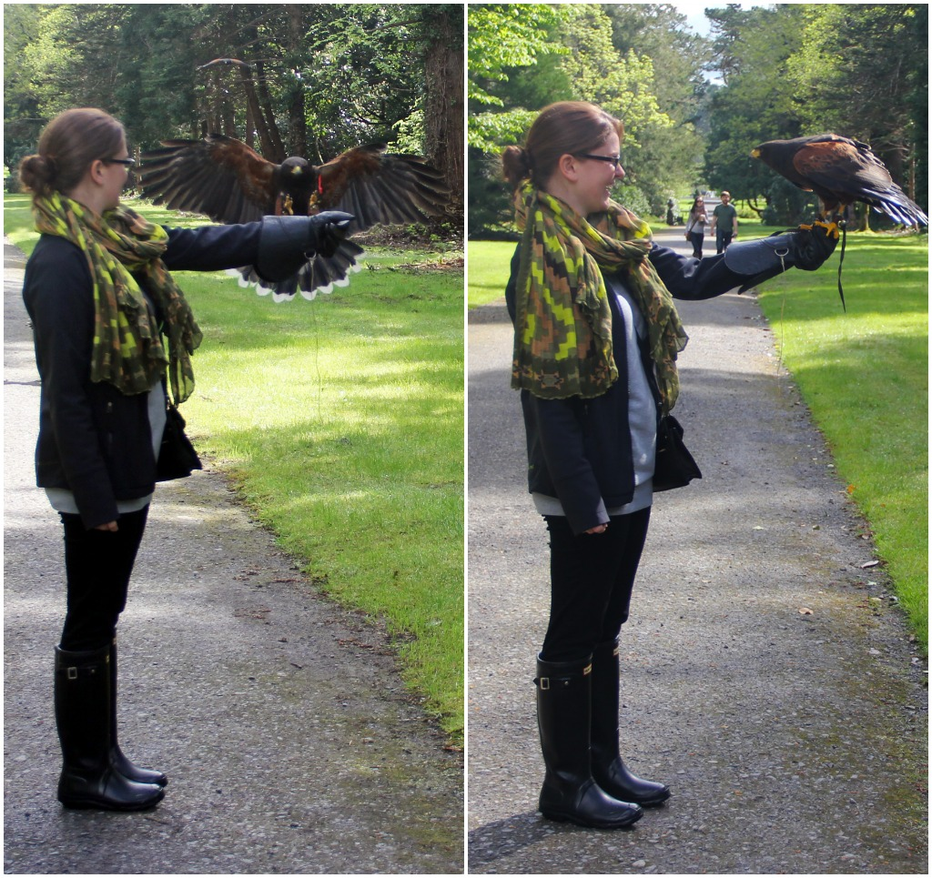 ashley - falconry