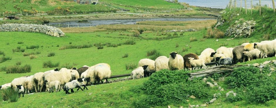 touring ireland: a day in clifden & connemara