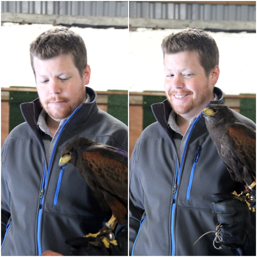 jeff - falconry