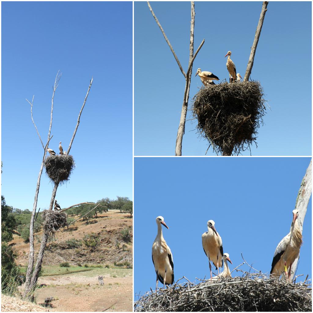 Alentejo Death Birds