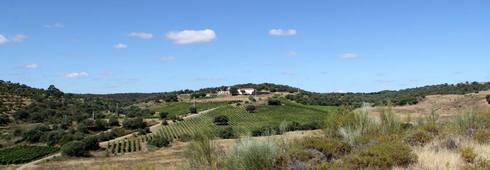 olá, portugal! wine time in the alentejo