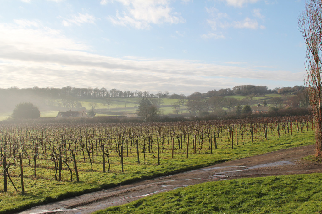 Isle of Wight - Misty Morning