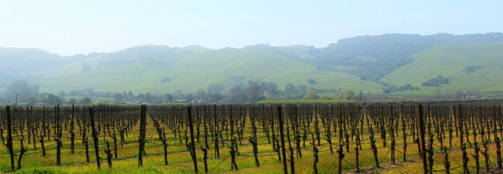 video sneak peek: 24 hours in napa valley