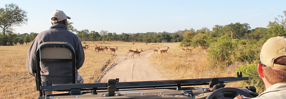 #LTsouthafrica: on safari with @SabiSabiReserve
