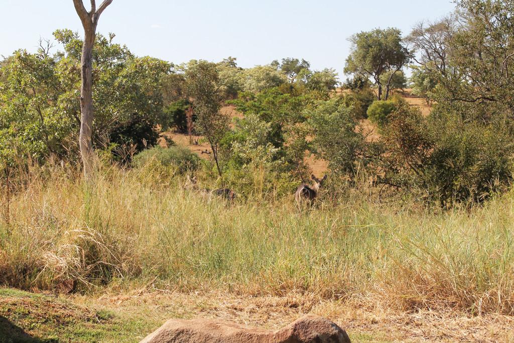 wildlife at sabi sabi