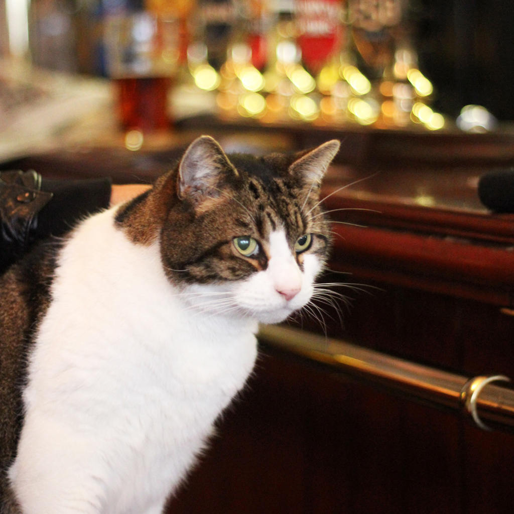 lenny the pub cat