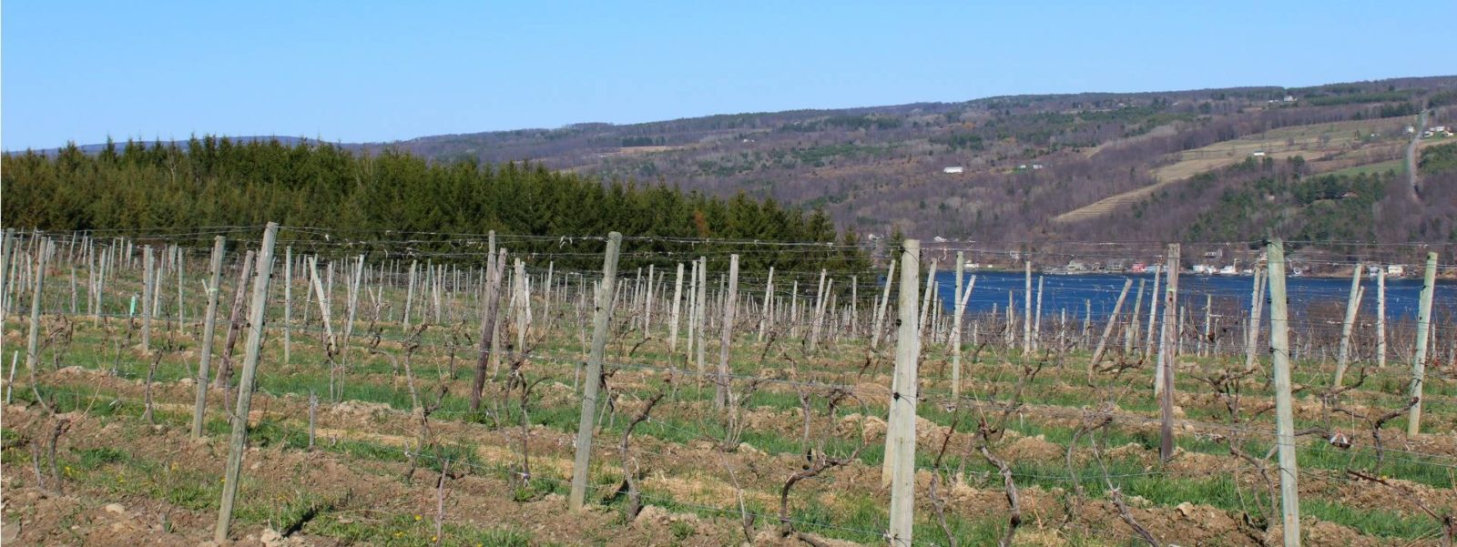 the beginner's guide to the southern finger lakes