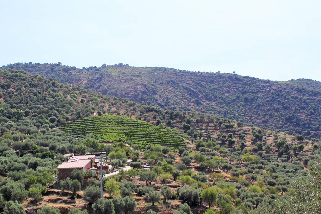 douro-valley-lagares-villa